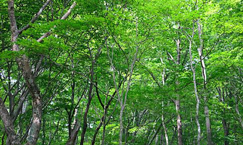面の木園地
