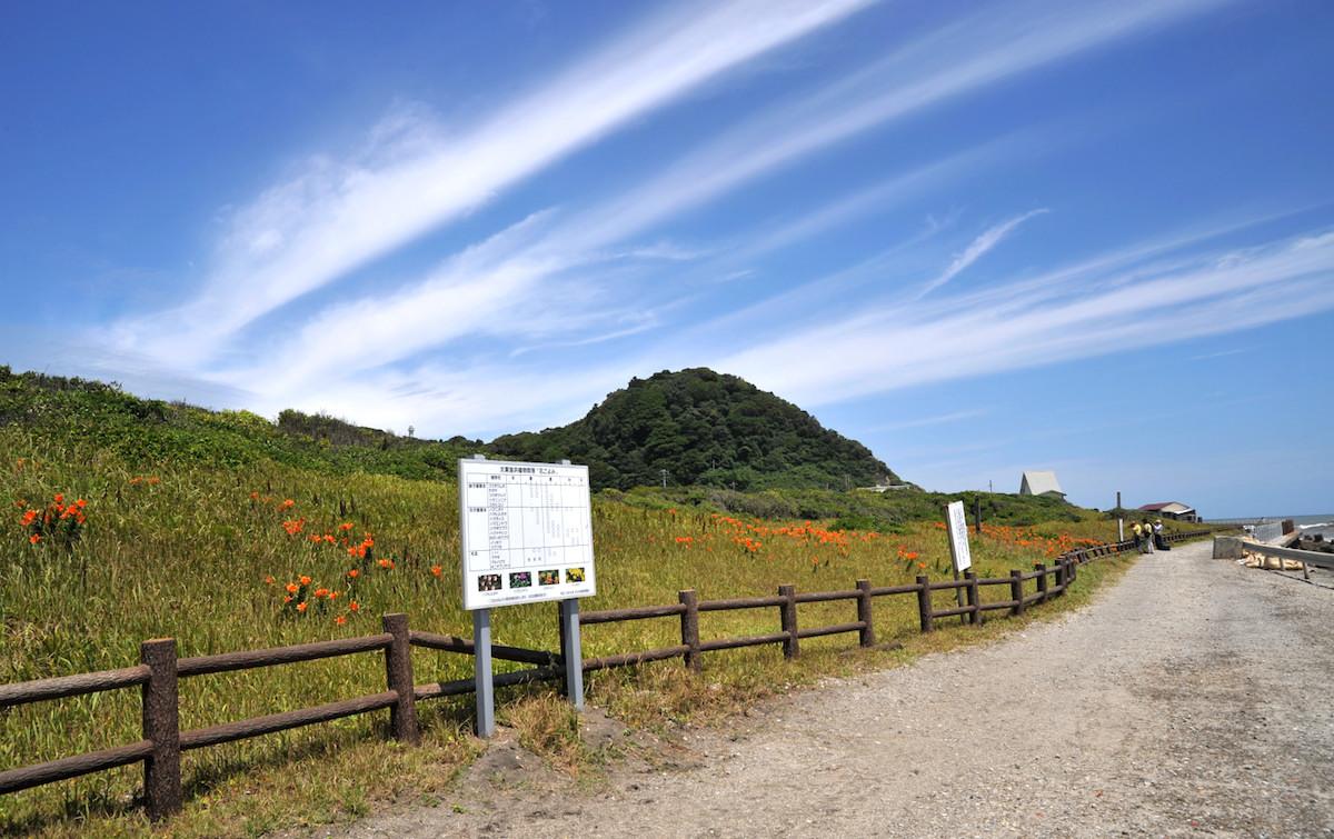 太東海浜植物群落