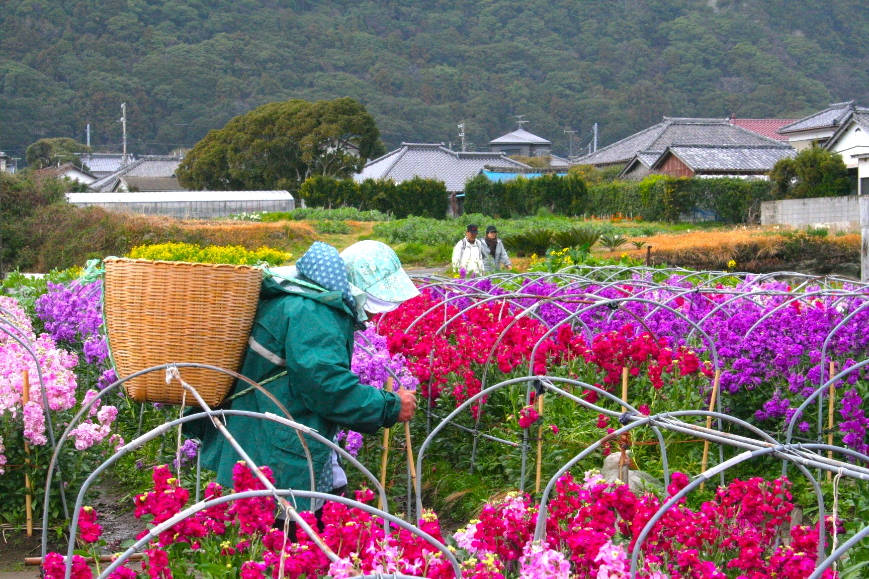 千田のお花畑