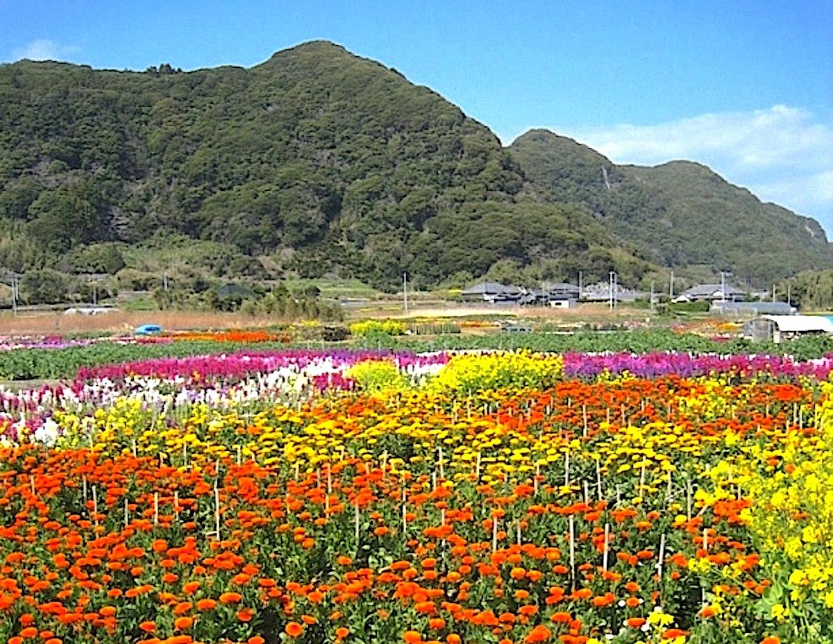 大川のお花畑