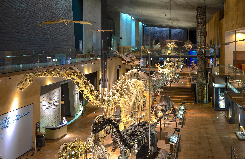 北九州市立いのちのたび博物館