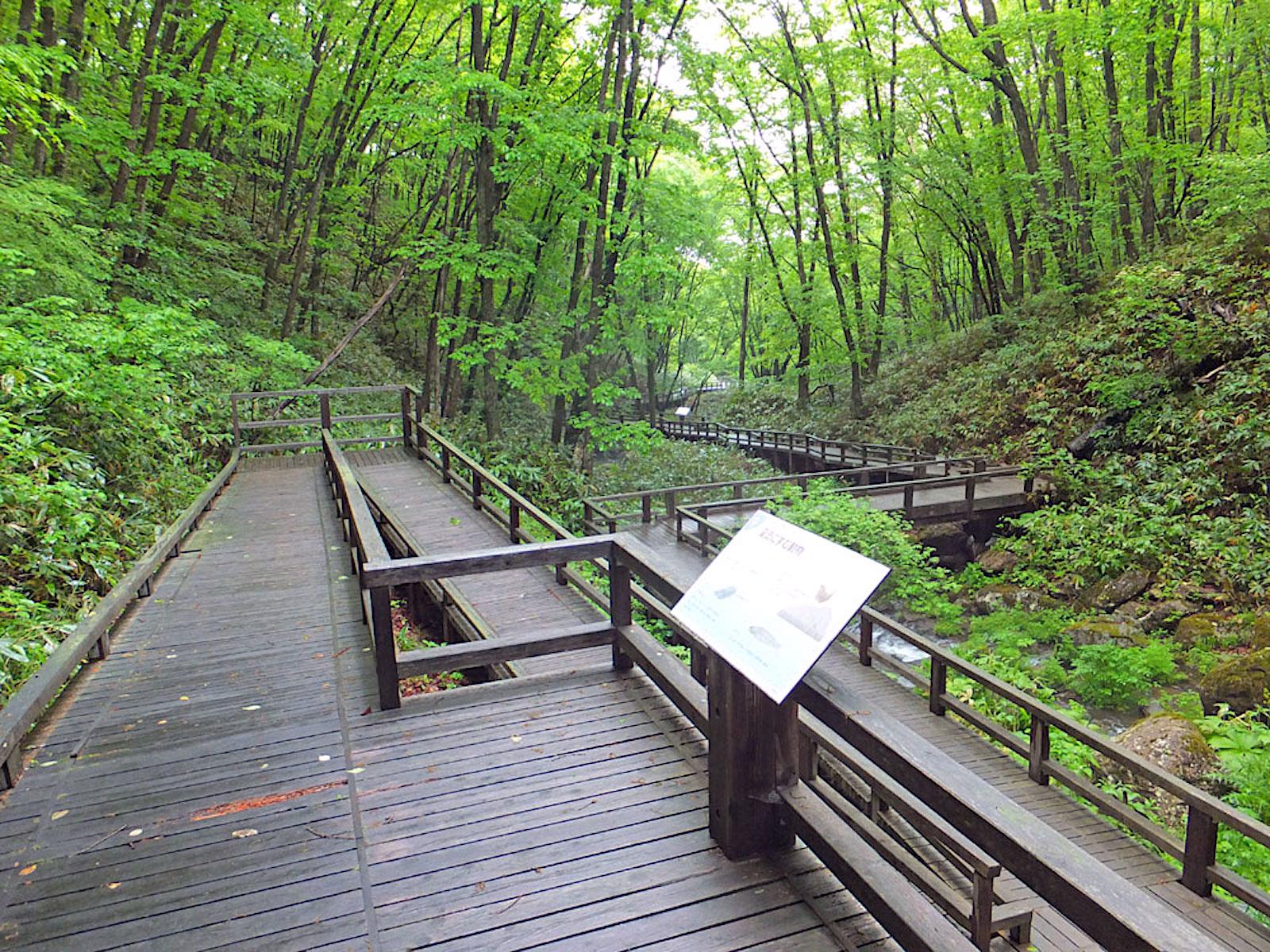 鹿沢園地自然学習歩道