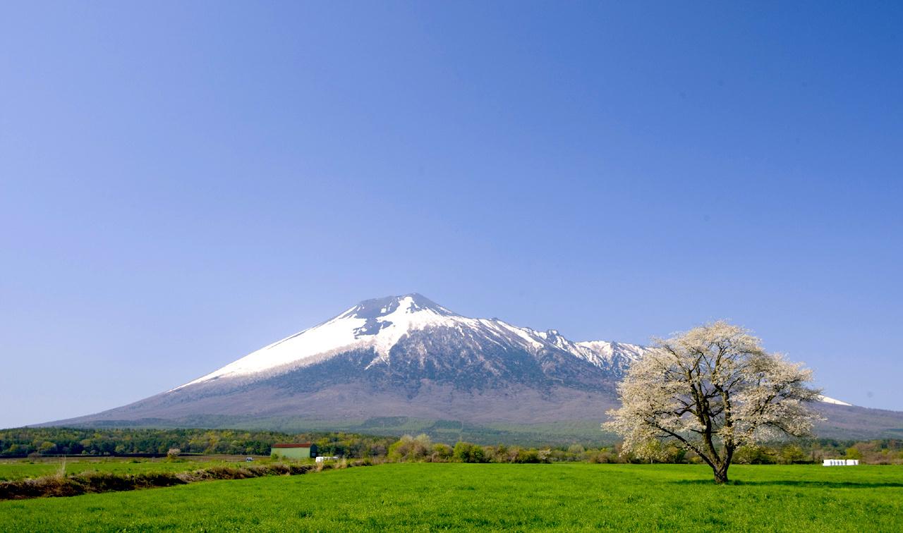 上坊牧野の一本桜
