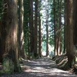 八海神社杉並木