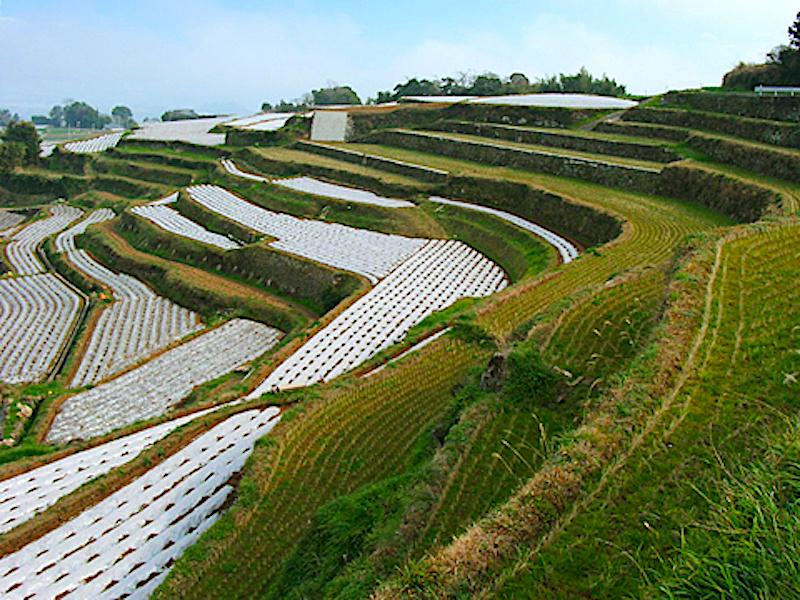 谷水の棚田
