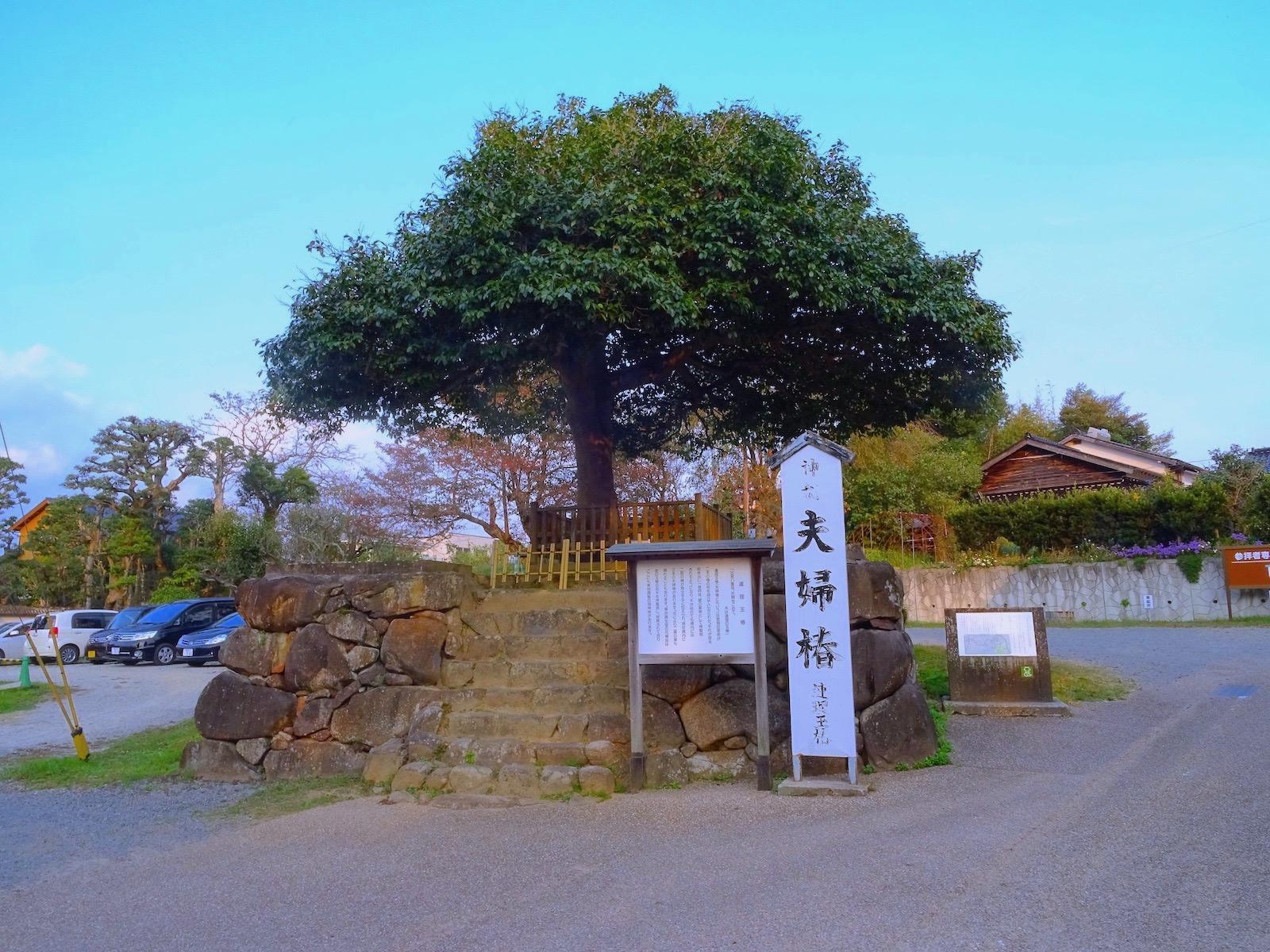 八重垣神社・道理玉椿(夫婦椿)