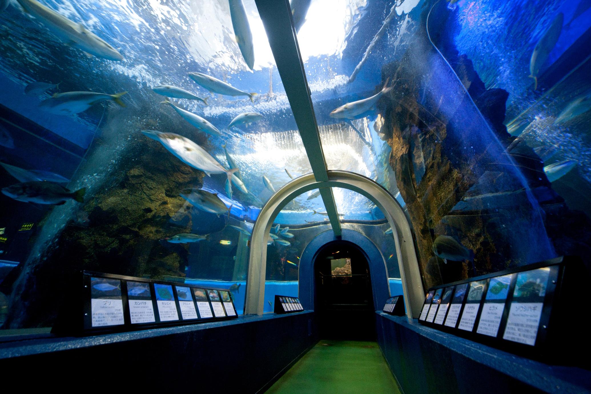 魚津水族館