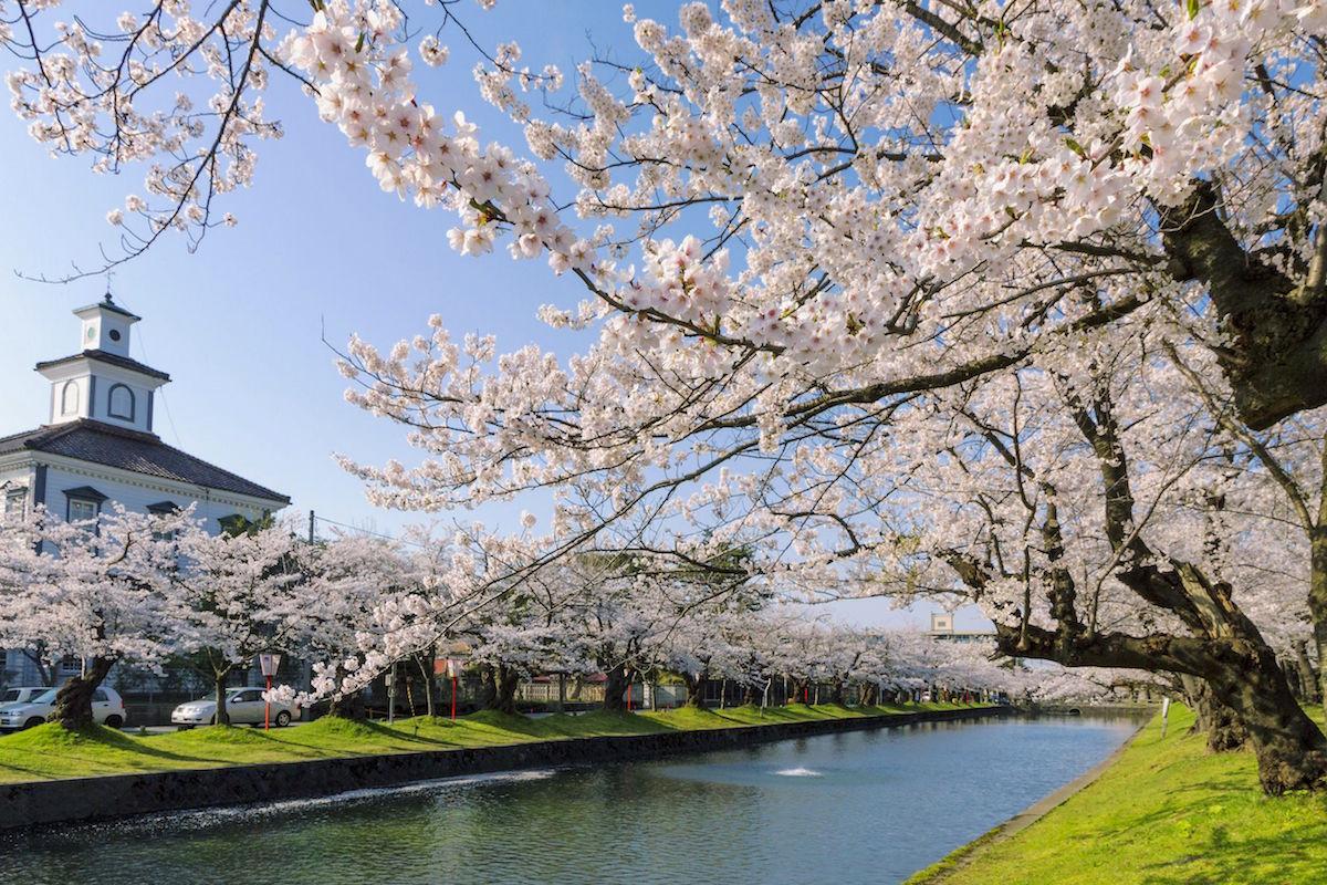 「鶴岡公園」の画像検索結果