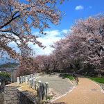 甚六桜公園