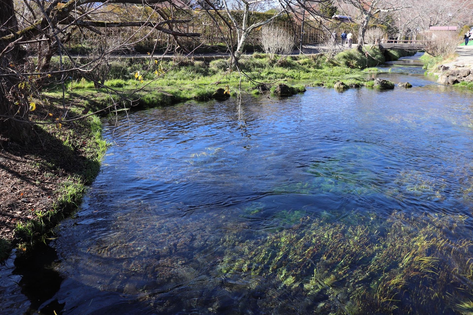 忍野八海・濁池