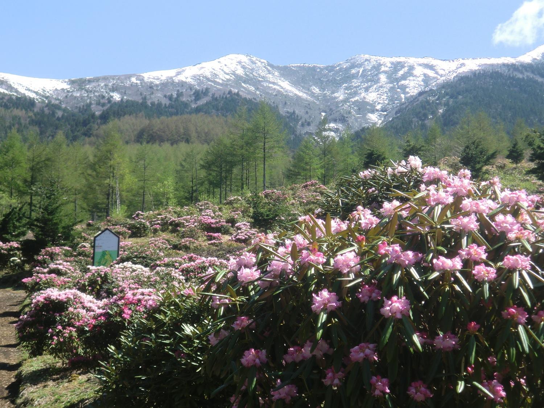 浅間高原シャクナゲ園