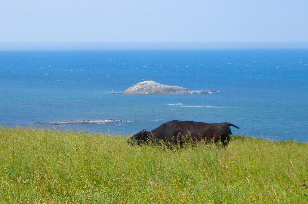 宗谷丘陵から眺めた弁天島