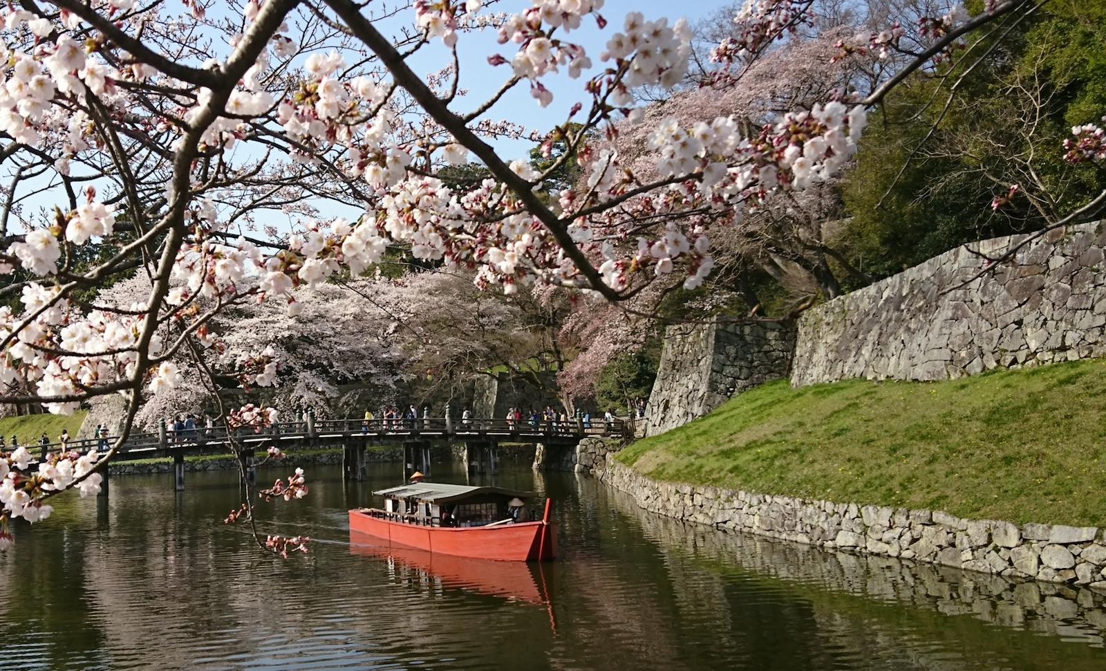 彦根城桜まつり