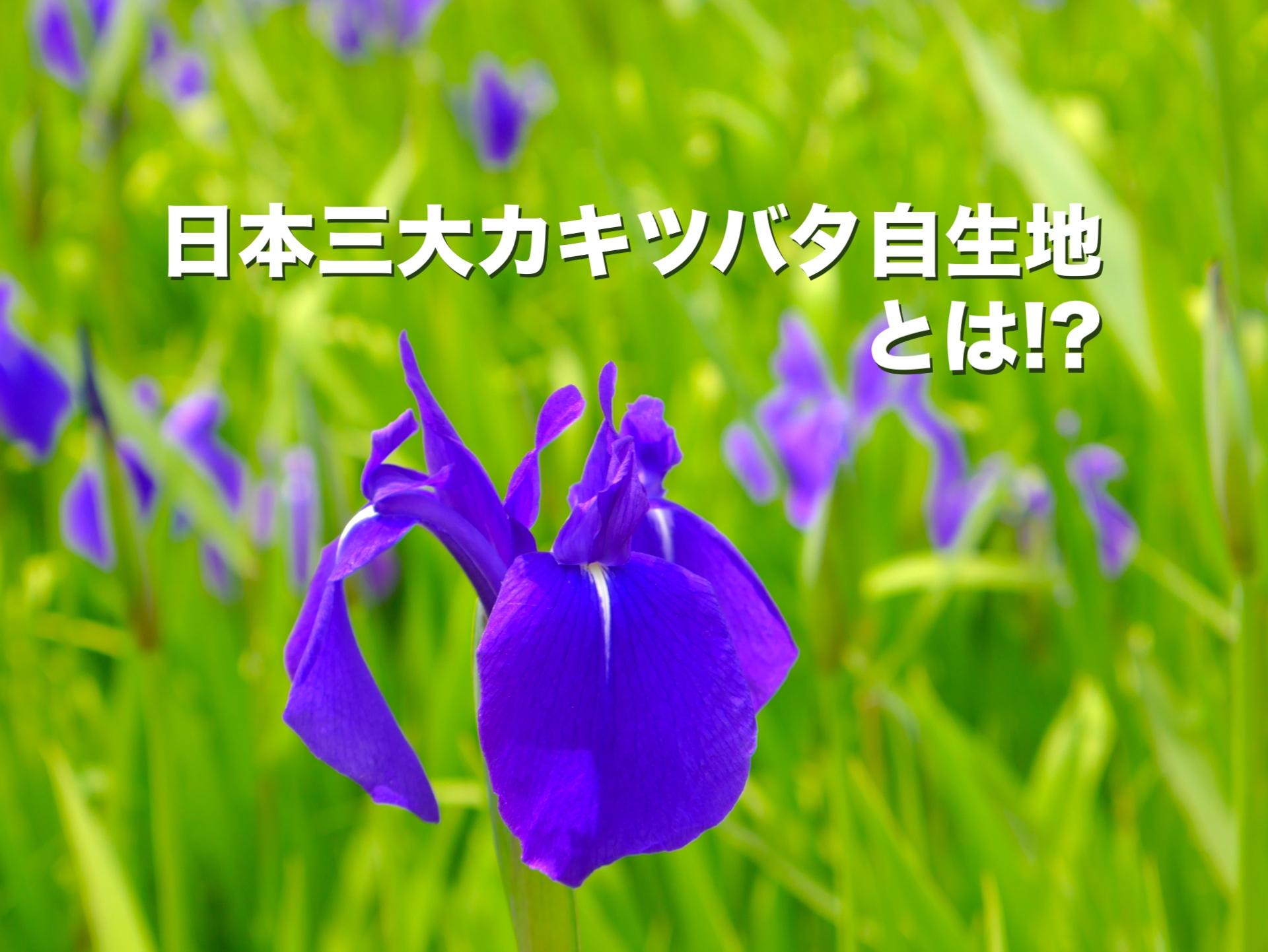 日本三大カキツバタ自生地