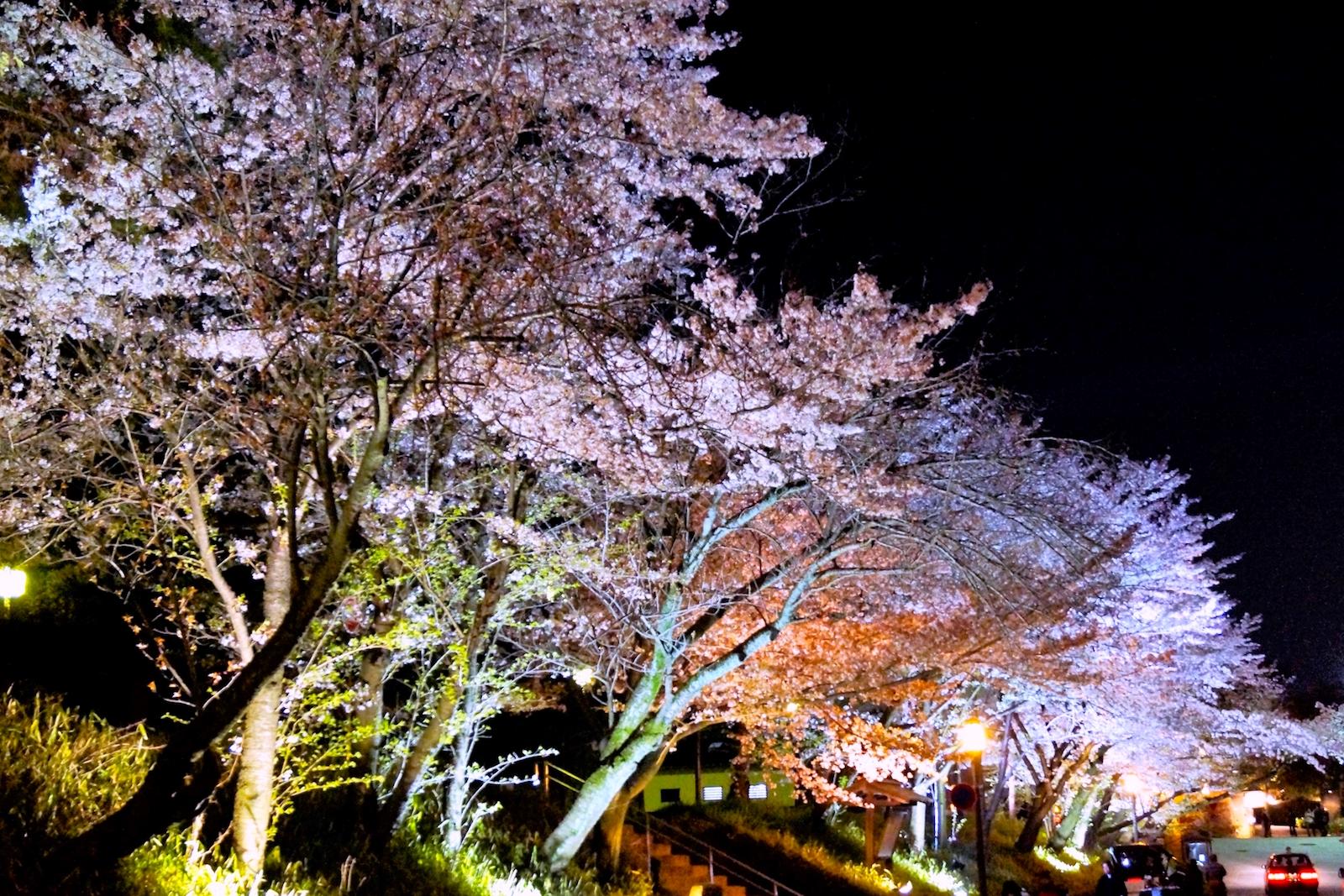 高台寺『春の特別展・春の夜間特別拝観』