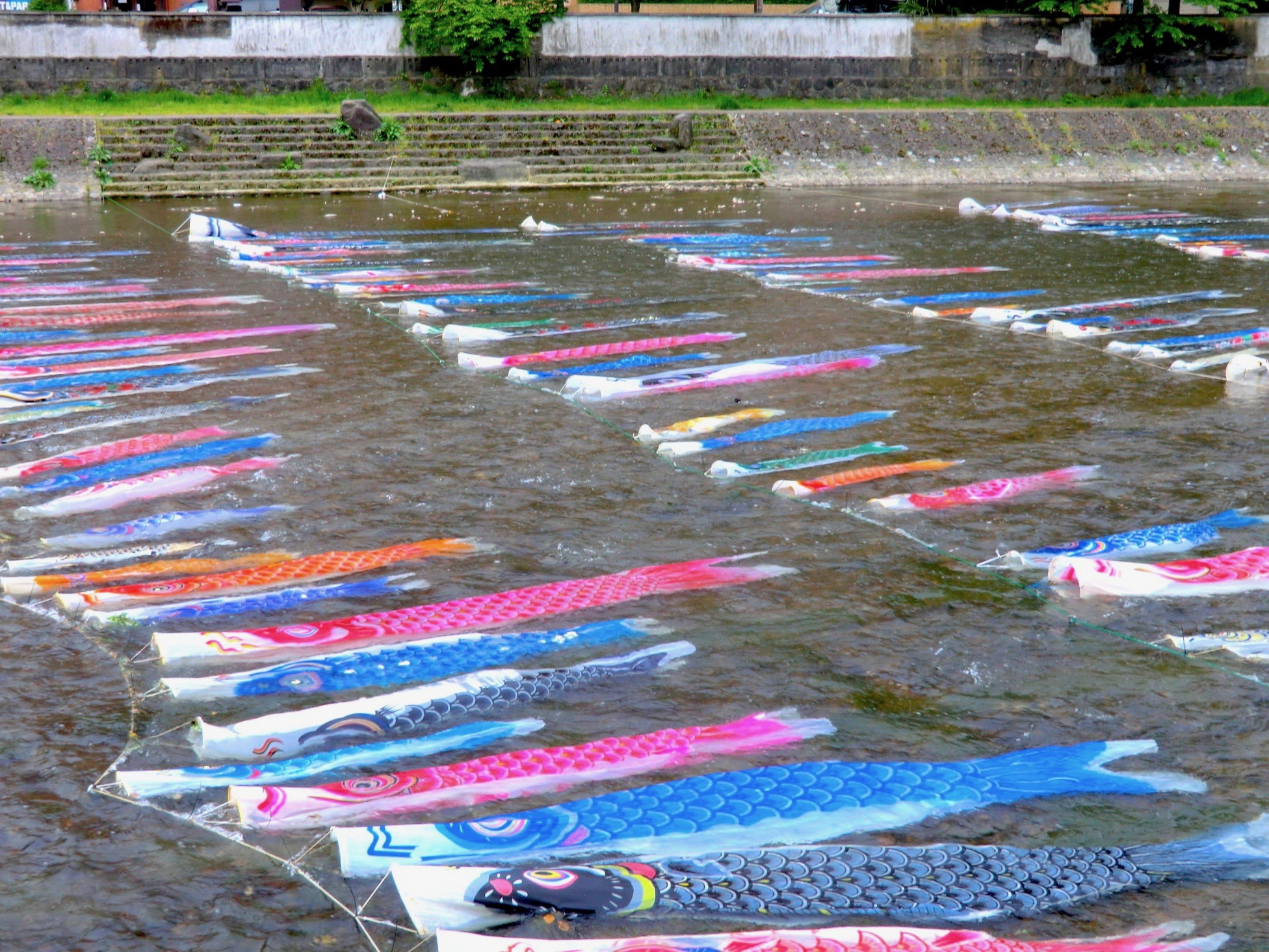浅野川・鯉流し