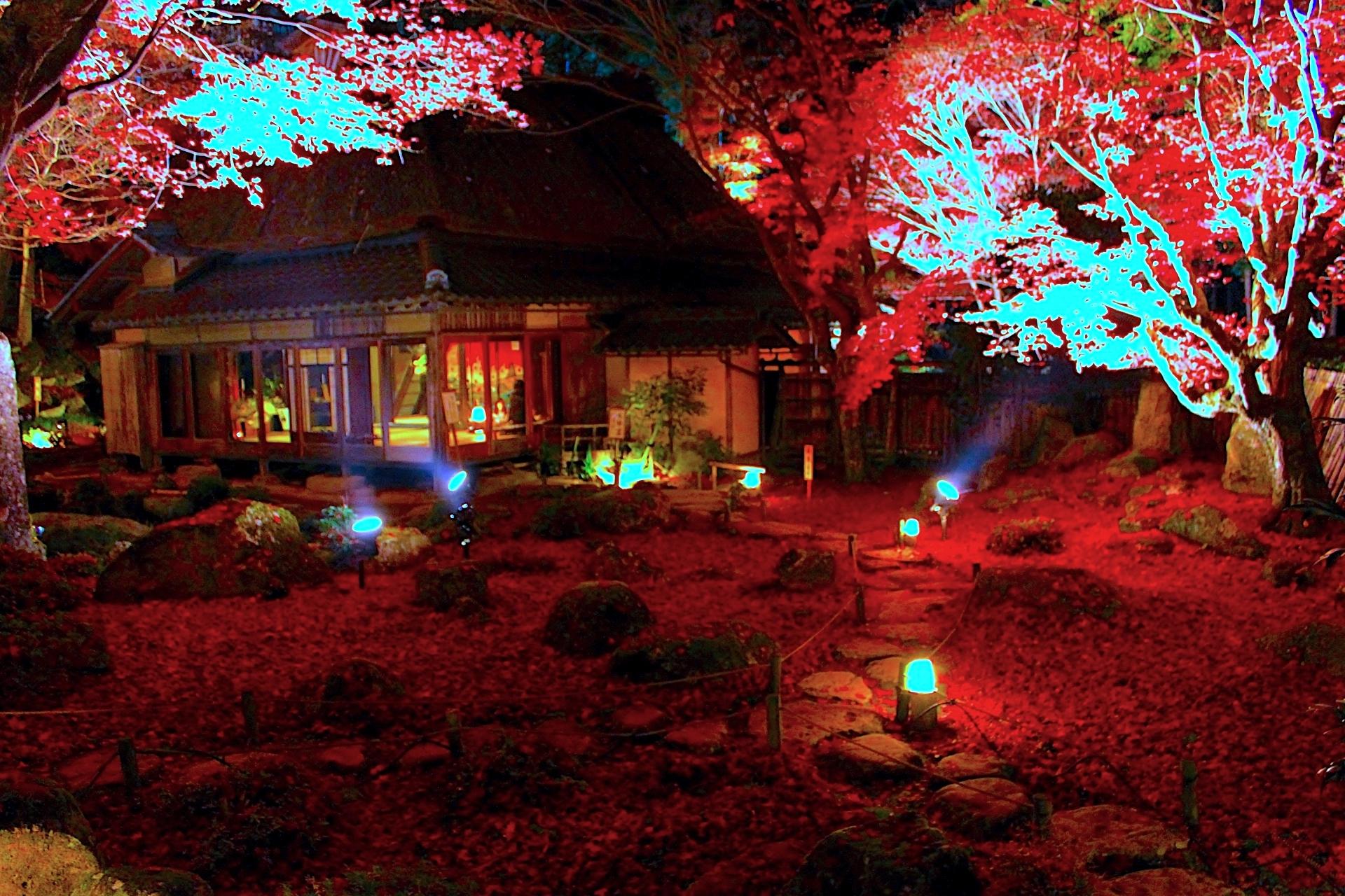 教林坊『紅葉ライトアップ』