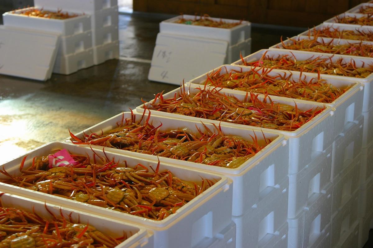 松葉ガニ初水揚げの風景。旅館などに安定価格で入るのは11月10日頃から