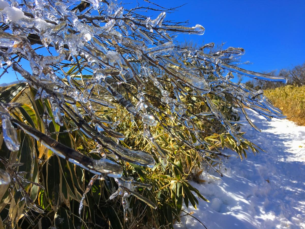 登山道にも樹氷が