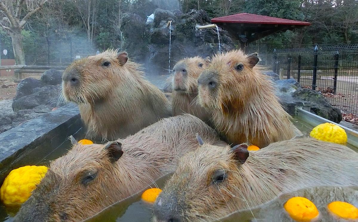 打たせ湯付きの岩風呂で「ユズ湯」にご満悦!