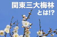 関東三大梅林