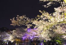 栗林公園『春のライトアップ』|2019|高松市
