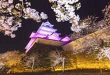 鶴ヶ城桜ライトアップ|2019